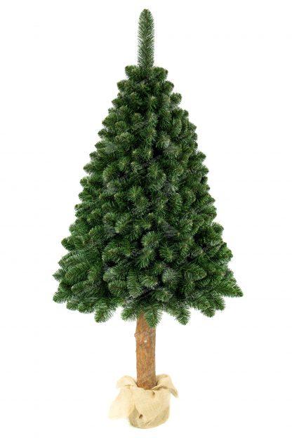 Hustá koruna vianočného stromčeka postavená na drevenom pníku. Vetvičky stromčeka sú prirodzene zelenej farby. Cely stromček je postavený na betónovom podstavci zabalenom vrecovinou .