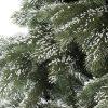 Detailná fotka vetvičiek umelého vianočného stromčeka 3D Borovica Himalájska Zasnežená . Vetvičky sú pokryté jemnou vrstvou umelého snehu, ktorý pôsobí veľmi autentickým dojmom. Sneh pokrýva 3D vetvičky borovice .