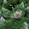 Detailná fotka vetvičiek umelého vianočného stromčeka. Do špica zastrihnuté vetvičky sú zafarbené do bielej farby a tak imitujú sneh. V strede fotky je krásna borovicová šiška zafarbená do strieborna .