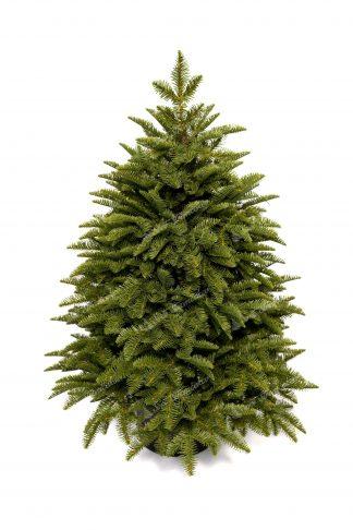 Hustý malý vianočný stromček v kvetináči. Stromček je bledozelenej farby.