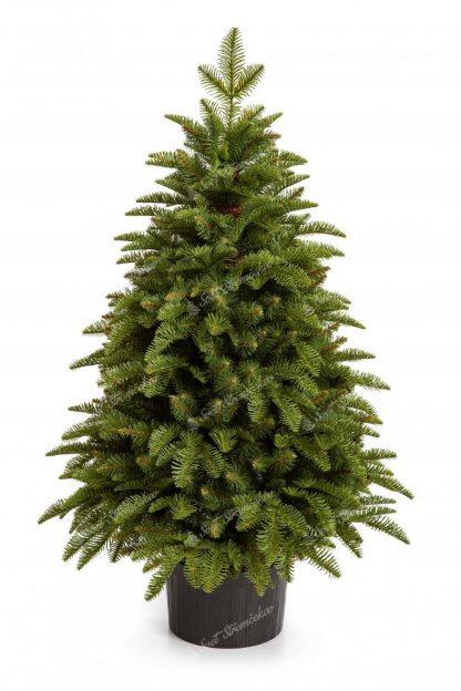 Hustý malý vianočný stromček bledozelenej farby v kvetináči.