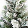 Zasnežené ihličie bieleho vianočného stromčeka Borovica Biela