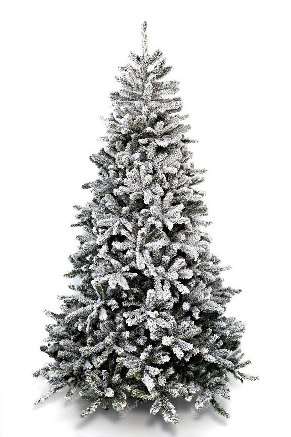 Biely vianočný stromček Smrek Severský