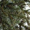 Vianočný stromček FULL 3D Jedľa Normandská detail ihličia