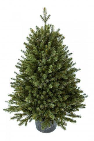 Vianočný stromček FULL 3D Smrek Alpský v kvetináči
